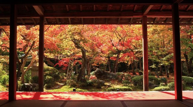 The Best Spots to Fully Enjoy Kyoto Japan!