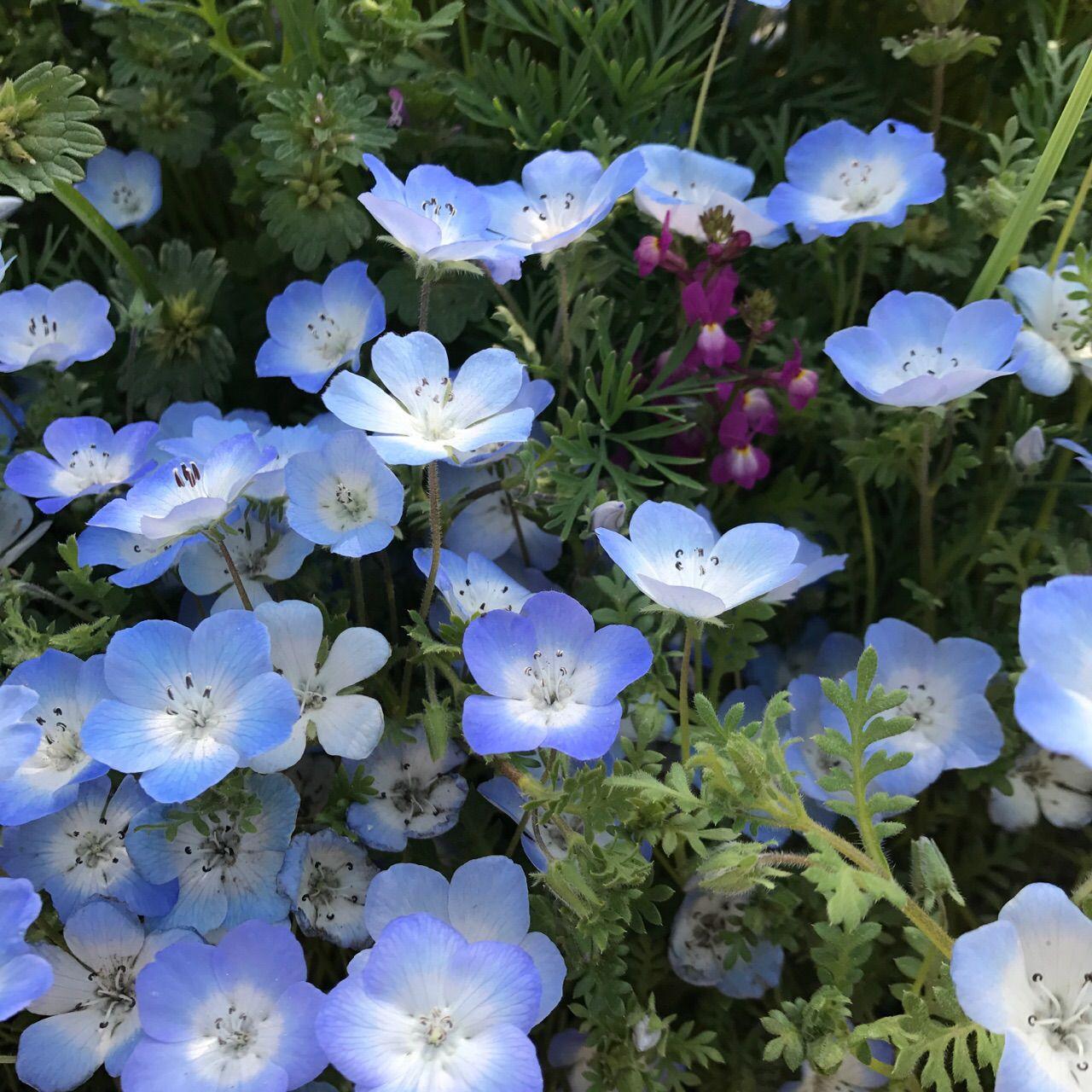お花がいっぱいのスポット♡