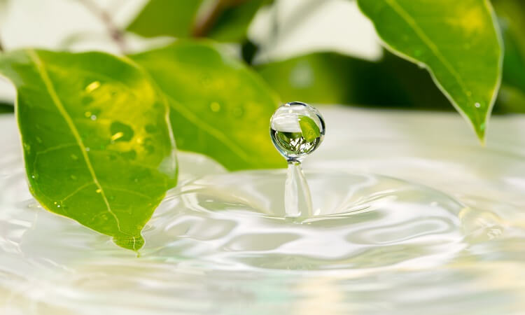 DIY化妝水的基本成分解說